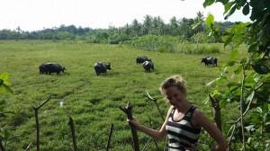 buffalo selfie